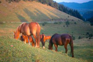 sunset-horses-16396-m