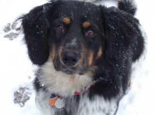 snow-dog-1-638021-m