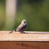 porch-bird-1362051