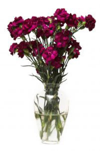 purple-bouquet-428813-m