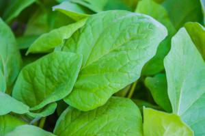 seedlings-of-vegetable-marrows-1443703-m